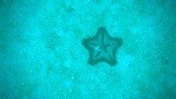Nice looking starfish