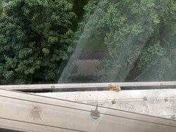 Schmutz Fenster