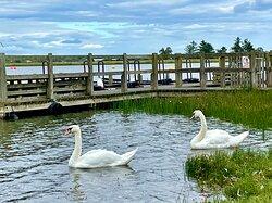 """ But calm, white calm , was born into a swan 🦢.""  - Elizabeth Jane Coatsworth"