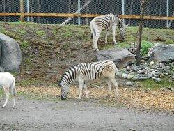 Zoo Miller