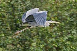 A bird watchers paradise