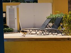 Sunbeds next to a baby pool.