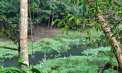 Natamu - una noche en la selva