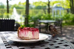 Cheescake and friendly guest