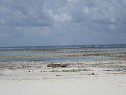 La mer est très loin à marée basse, chaussures recommandées pour parcourir le récif (nombreux oursins)