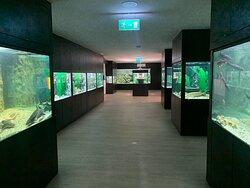 Aquariums.
