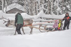 Reindeer safari and tradition programs in Lapland