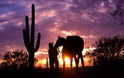 Experience the beauty of the Sonoran Desert.
