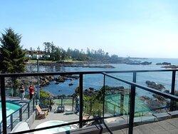 view from ocean view studio 2nd floor, overlooking pool