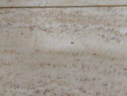 Habitaciones llenas de hormigas y otros insectos