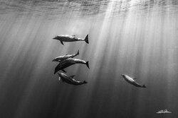 Dolphins stopped by to say hi - Amazing photo by Nacho Pelaez (Nacho Pelaez Photography).