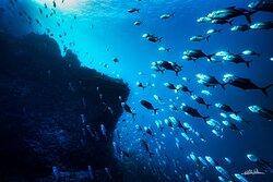 Blending with the Jacks at the bottom of Isla del Carmen - Amazing photo by Nacho Pelaez (Nacho Pelaez Photography).