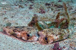 Smooching session underwater!