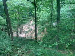 Above the Styx River cave see boardwalk viewing area.