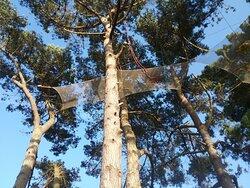 Filets en haut des arbres face à la plage Quo Vadis à Trégastel.