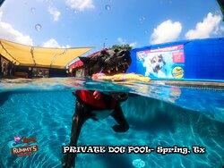 #swimming at Rummy's Beach Club #privatedogpool #privatedogbeach #beachdoggo #beachdoglife #dogbeachdays #doggiebeach #beachdoggies #privatebeach #beachdogsofinstagram #texasbeach #californiabeaches #californiabeach #beach #beachday #beachclubs #beachclub #beachdaysarethebestdays #beachbums #beachlover #beachtime #beachlovers #beachlife🌴