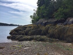The treasure of the remote side of Maine