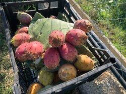 La variegata scelta di frutti del nostro orto…