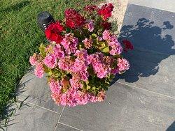 La cura dei fiori del nostro giardino che fanno da cornice a questo paradiso di relax.