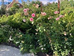 Wij trädgårdar - rose garden