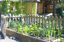 Raised beds for veg