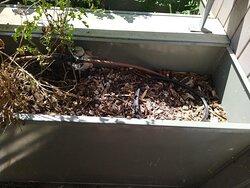 la jardinière de mon balcon, la classe non?