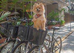 Ipanema Inn Pet Friendly