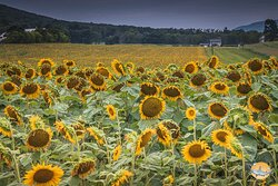 Perfect weekend getaway with plenty of Wildlife and fields of sunflowers.