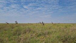 The land of giraffes...