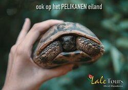 Pelikaanen eiland