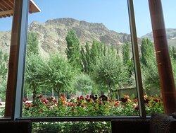 Cudownie wyglądają za przestronnymi oknami Centrum krzewy róż na tle topoli i gór .