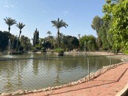 Lac avec canards et cygnes