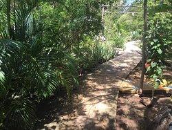 Gardens Grounds Katamah Tresure Beach Guesthouse Villa on the Beach South Coast Jamaica