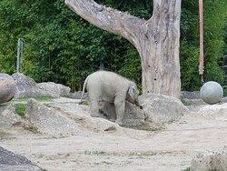 Babyelefant alleine unterwegs