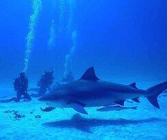 Bull shark diving with Get Wet Dive shop Playa del Carmen
