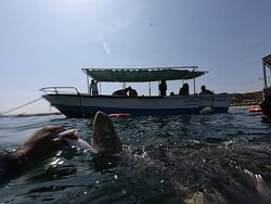 Aventuras marinas tours completo 3 en 1 avistamiento de ballenas, lobos marinos y nado con tortugas en los  los órganos Talara Piura Perú reservas turísticas 947295194