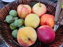 Fruta del tiempo.