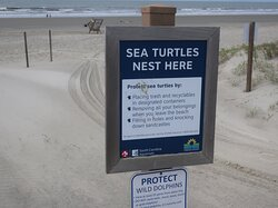 There are Sea Turtles.