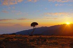Kilimanjaro - Kessy Brothers