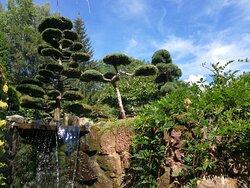 Strzyżone drzewa nad wodospadem ...