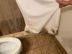 Mold on the shower curtain in main bathroom.