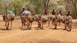 Close to Rich Samburu and Rendille Culture