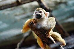 Mono araña en mundomar con Charo Tainta