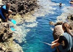 its line snake in blue hole in dahab