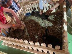 Bunnies @dutch village