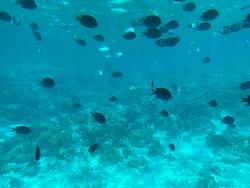 Лучшие кораллы
