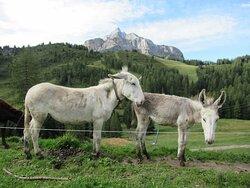 Asinelli bianchi e Monte Civetta