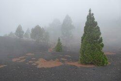 La niebla entre las ce nizas y arenas volcanicas