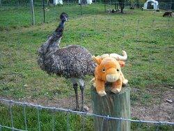 birds watches Jake at Hidden Valley Animal Adventure