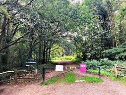 2.  Hemsted Forest, Benenden, Kent